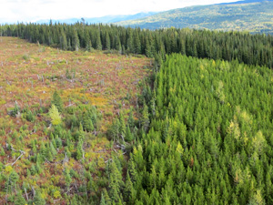 sustainable_forest_management